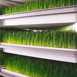 grass-3