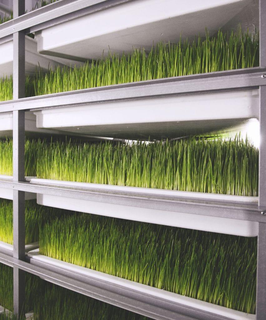 Гидропонный зеленый корм для животных