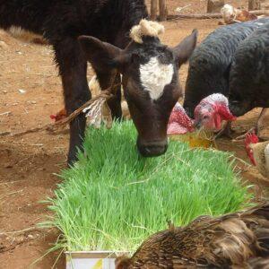 123 300x300 - Комплексы гидропонного корма для животноводства