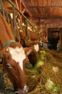Ib9thTnSdc8 200x300 - Комплексы гидропонного корма для животноводства