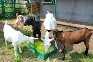 RPh KLgV44s 300x200 - Комплексы гидропонного корма для животноводства
