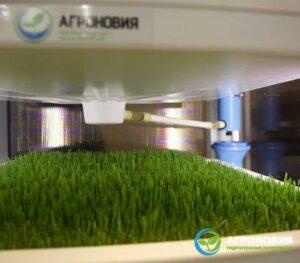 04 300x263 - Гидропонные системы для выращивания зелени круглый год