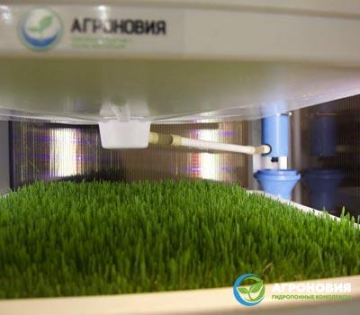 04 - Гидропонный метод выращивания зеленой массы