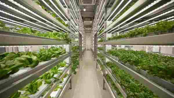 oborudovanie promishlennaya gidroponika - Гидропонный метод выращивания зеленой массы