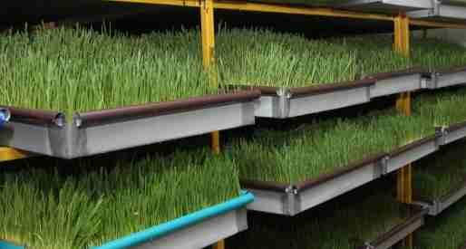 zelenaya massa gidroponika - Гидропонный метод выращивания зеленой массы
