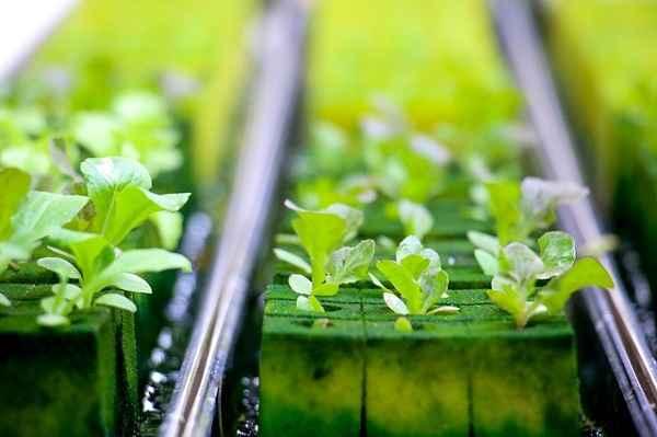 gidroponika zelen - Оборудование гидропоники для выращивания зелени и корма