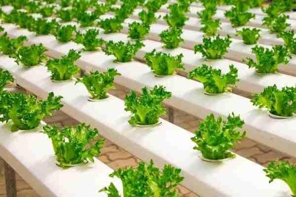 Купить промышленную гидропонную установки для зелени и кормов КРС