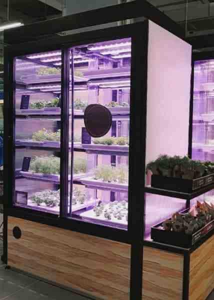 Гидропоника в Москве: как развивать бизнес с помощью сити-фермерства
