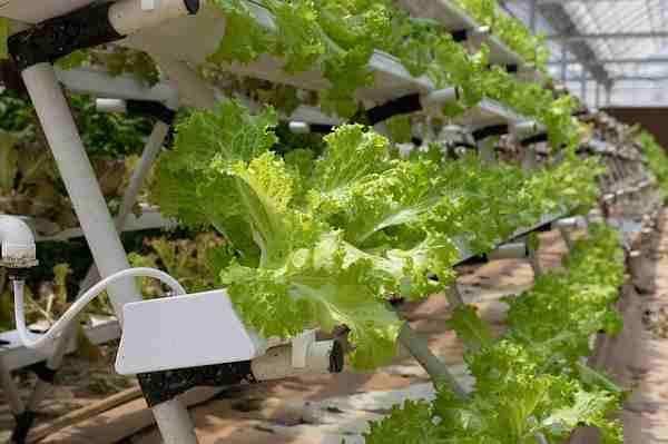 kupit gidroponika - Купить гидропонную установку в Москве для промышленного выращивания зелени