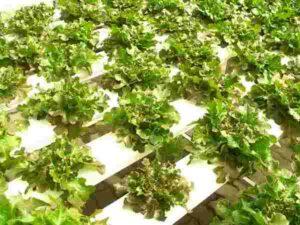 ustanovka vyrashhivanija 300x225 - Каталог установок для выращивания: виды оборудования