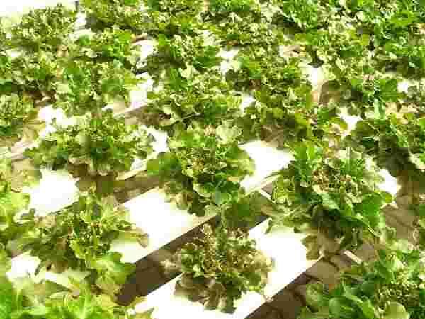 ustanovka vyrashhivanija - Каталог установок для выращивания: виды оборудования