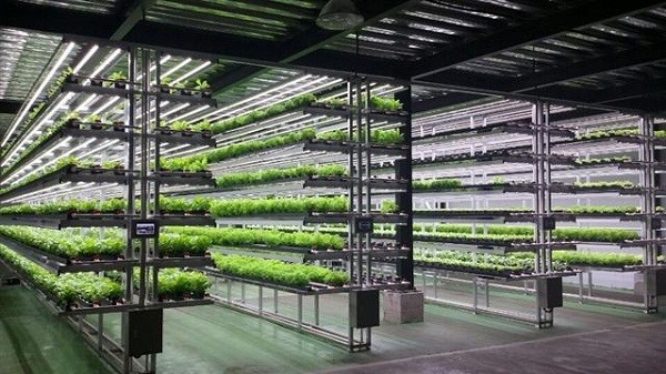 farm - Многоярусная гидропонная система: описание, комплектация, преимущества