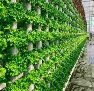 ferma 300x292 - Купить вертикальные мини фермы для выращивания зелени, овощей