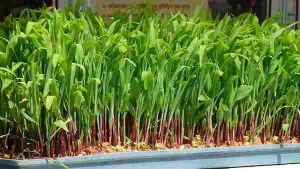 gidroponika - Гидропоника как выгодная технология выращивания растений