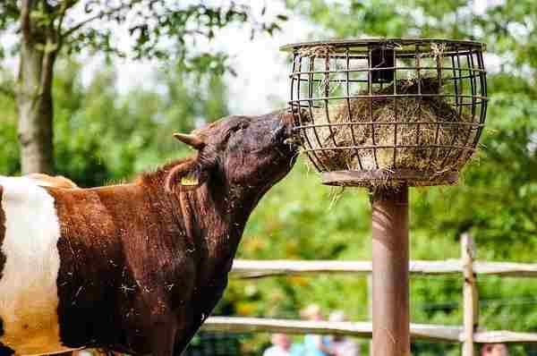 Выращивание гидропонных кормов для животных