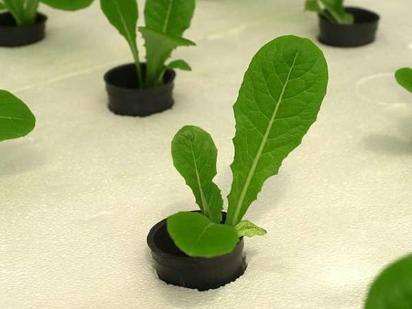 gidroponika - Системы, оборудование для гидропонного выращивания