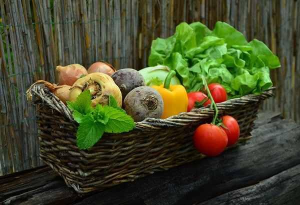 ovos - Как выращивать растения на гидропонике: салат, помидоры, огурцы, клубнику