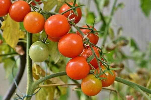 tomatoes - Сколько стоит гидропоника: цена в Москве
