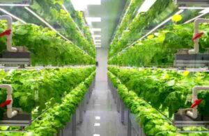 купить вертикальную ферму