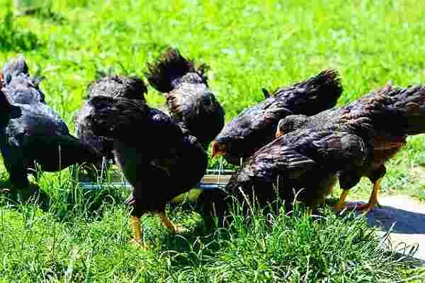 korm - Гидропоника для корма животным: польза, оборудование