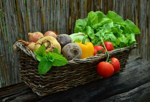 ovoshi - Как выращивать растения на гидропонике: салат, помидоры, огурцы, клубнику