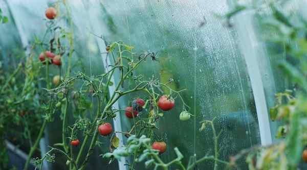 tomat - Оборудование для промышленных теплиц: принцип работы, описание